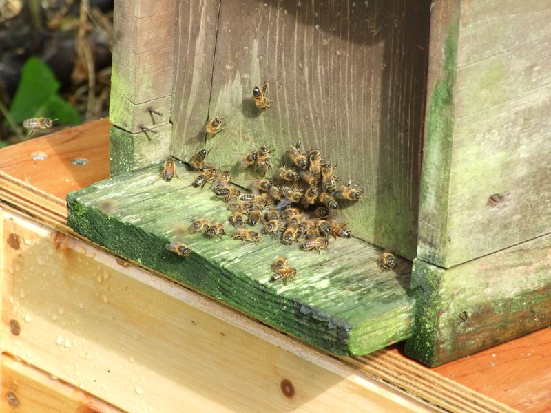 My 1st bee pics in may 11 (3)