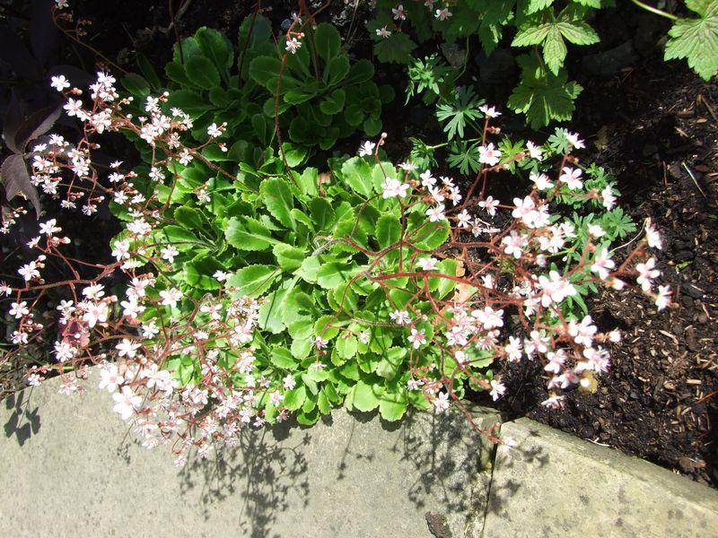 Flowers in June & Socks 010
