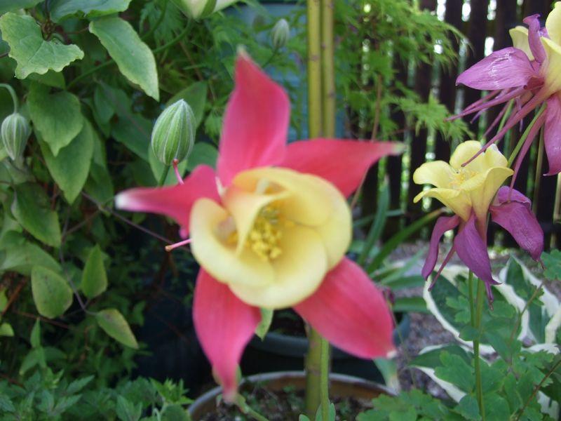 Flowers in June & Socks 008