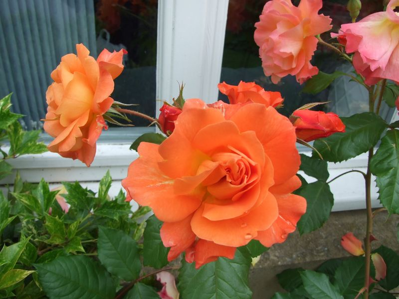 July 2015 Flowers of the day 066