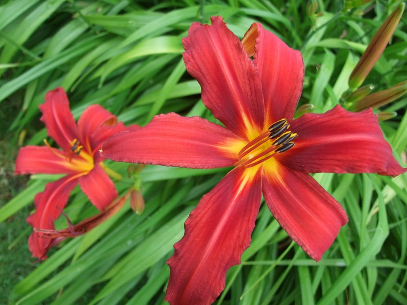July 2015 Flowers of the day 061