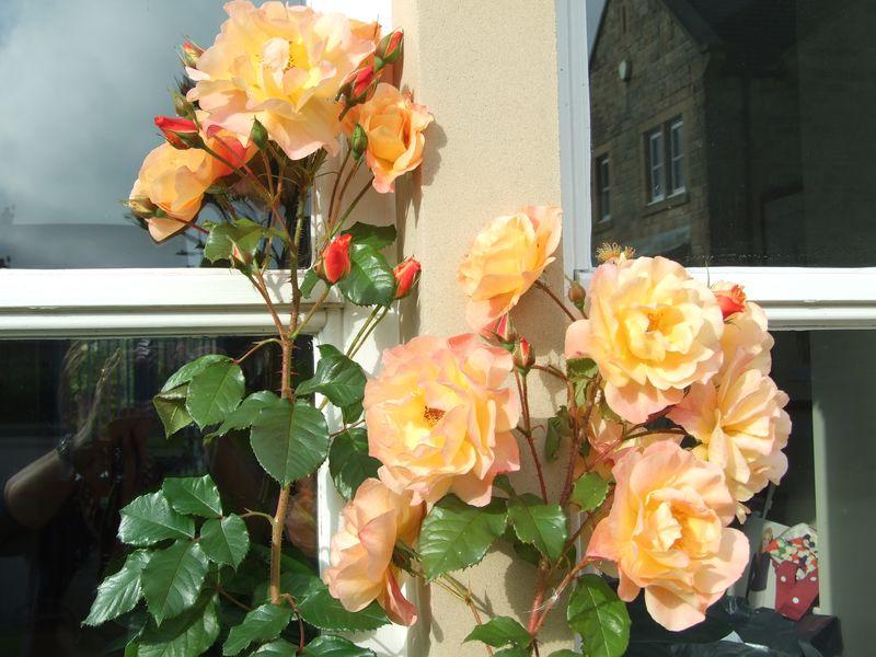 Roses in September 1