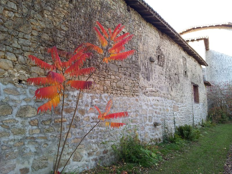 Limoges oct 2015 Mortemont 028